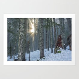 Woods on a Winter's Day Art Print