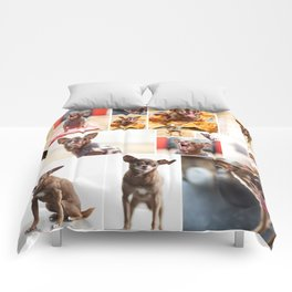 Chloe Obsession Comforters