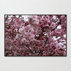 Blossoms in Bloomfield Canvas Print