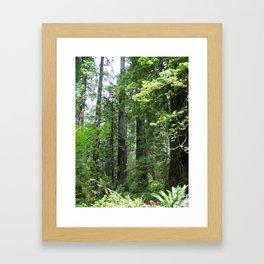 California forest Framed Art Print