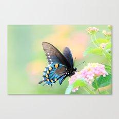 Spicebush Swallowtail Butterfly on Lantana Canvas Print