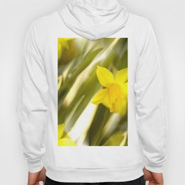 Spring atmosphere with yellow narcissus Hoody