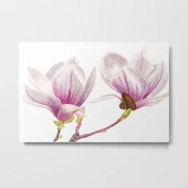 Magnolia Pair, A Watercolor Botanical Painting Metal Print