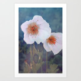 White poppies(2) Art Print