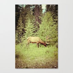 Time to Graze Canvas Print