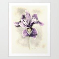 Opal Iris Art Print