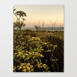 Blooms in the Salt Flats in Big Sur Canvas Print
