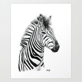 Young zebra Art Print