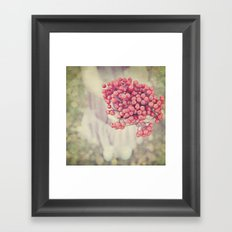 Mountain Ash Framed Art Print