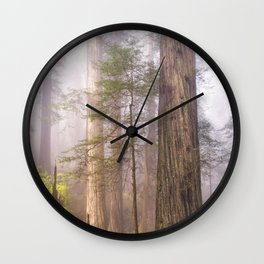 Fog & Tall Trees Wall Clock