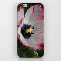 tulip iPhone & iPod Skins featuring Tulip by Vitta