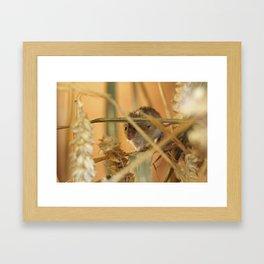 harvest mouse Framed Art Print