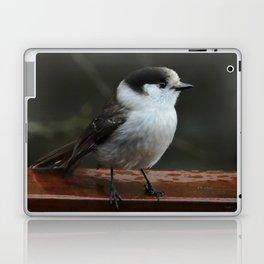 Gray Jay Laptop & iPad Skin