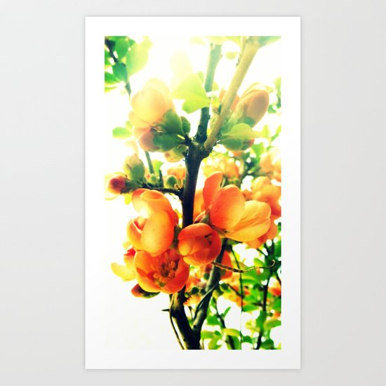 Softly Quince Art Print