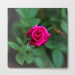 Tiny Pink Rose Metal Print