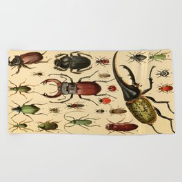 Popular History of Animals Beetles Vintage Scientific Illustration Educational Diagrams Beach Towel