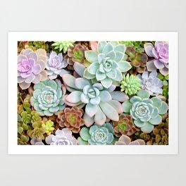 Pastel Succulent Garden Art Print
