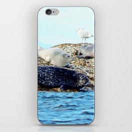 Seal Family iPhone Skin