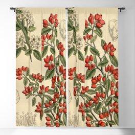 Cotoneaster pannosa 141 8594 Blackout Curtain