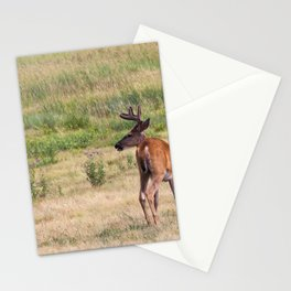 Alert Buck Stationery Cards