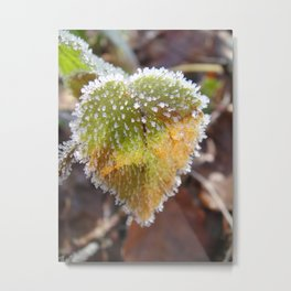 Colorful, heartshaped leaf with white frost Metal Print