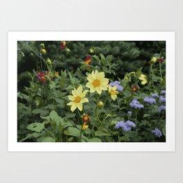 A flower bed Art Print