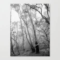 My view of Twenty Four April - New England National Park Canvas Print