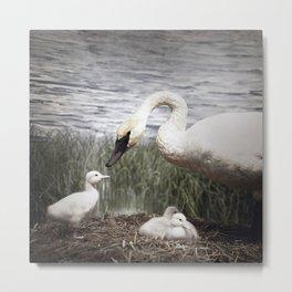 Tom Feiler Swan and her Cygnets Metal Print