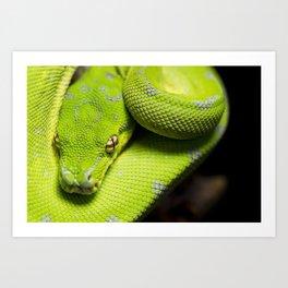 Galaxy, the green tree python Art Print