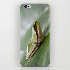 Mediterranean Tree Frog 1095 iPhone & iPod Skin