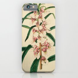 Flower 027 impatiens rosea Small Pink Balsam25 iPhone Case