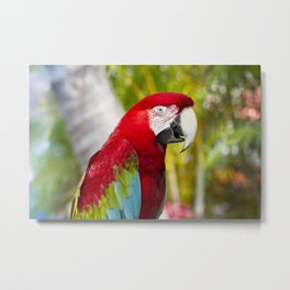 Green Winged Macaw Ara chloropterus Lahaina Maui Hawaii Metal Print