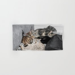 Bengal Cat Kitty Pile  Hand & Bath Towel