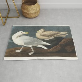 Burgomaster Gull from Birds of America (1827) by John James Audubon (1785 - 1851) etched by Robert H Rug