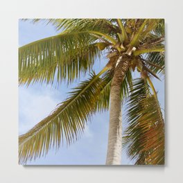 Palm Tree in Cuba Metal Print