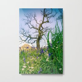 Amongst the Dusty Bluebells Metal Print