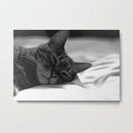 Cat Naps Metal Print