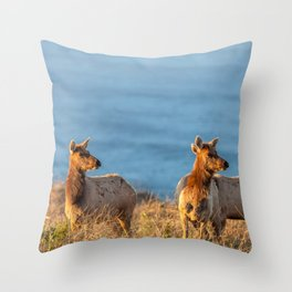 Tule Elk Cows II Throw Pillow