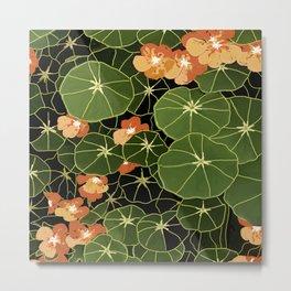 Tropaeolum flowers Metal Print