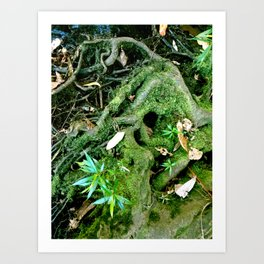 Old Roots Art Print