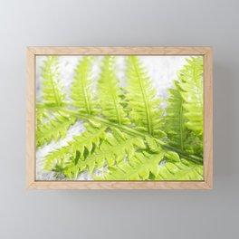 Fern 8 Framed Mini Art Print