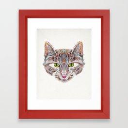 Broody Cat Framed Art Print