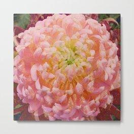 Chrysanthemum-Pink/Red Metal Print