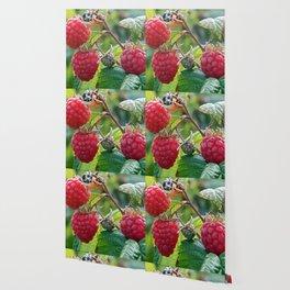 Raspberries Ready for Harvest Wallpaper