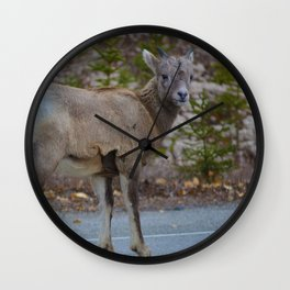 Big horn sheep stops to pose in Jasper National Park Wall Clock