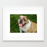 boxer Framed Art Prints featuring Boxer by Tbuddsy