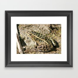 Frog in Mud Framed Art Print