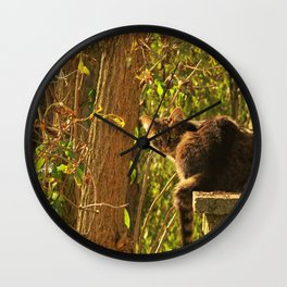 The curious cat Wall Clock