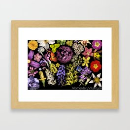 Radiant Onion Framed Art Print