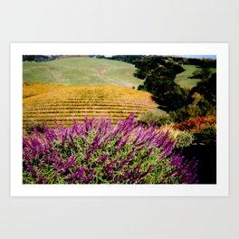 Napa Valley in Autumn Art Print